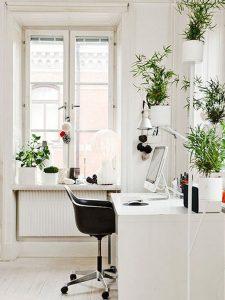 plantes-deco-bureau