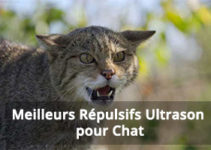 meilleur répulsif Ultrason pour Chat