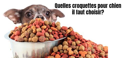 Quelles croquettes pour chien il faut choisir